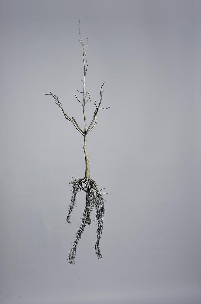 Потрясающие скульптуры в виде корня художника Sun-Hyuk Kim, которые стоит посмотреть