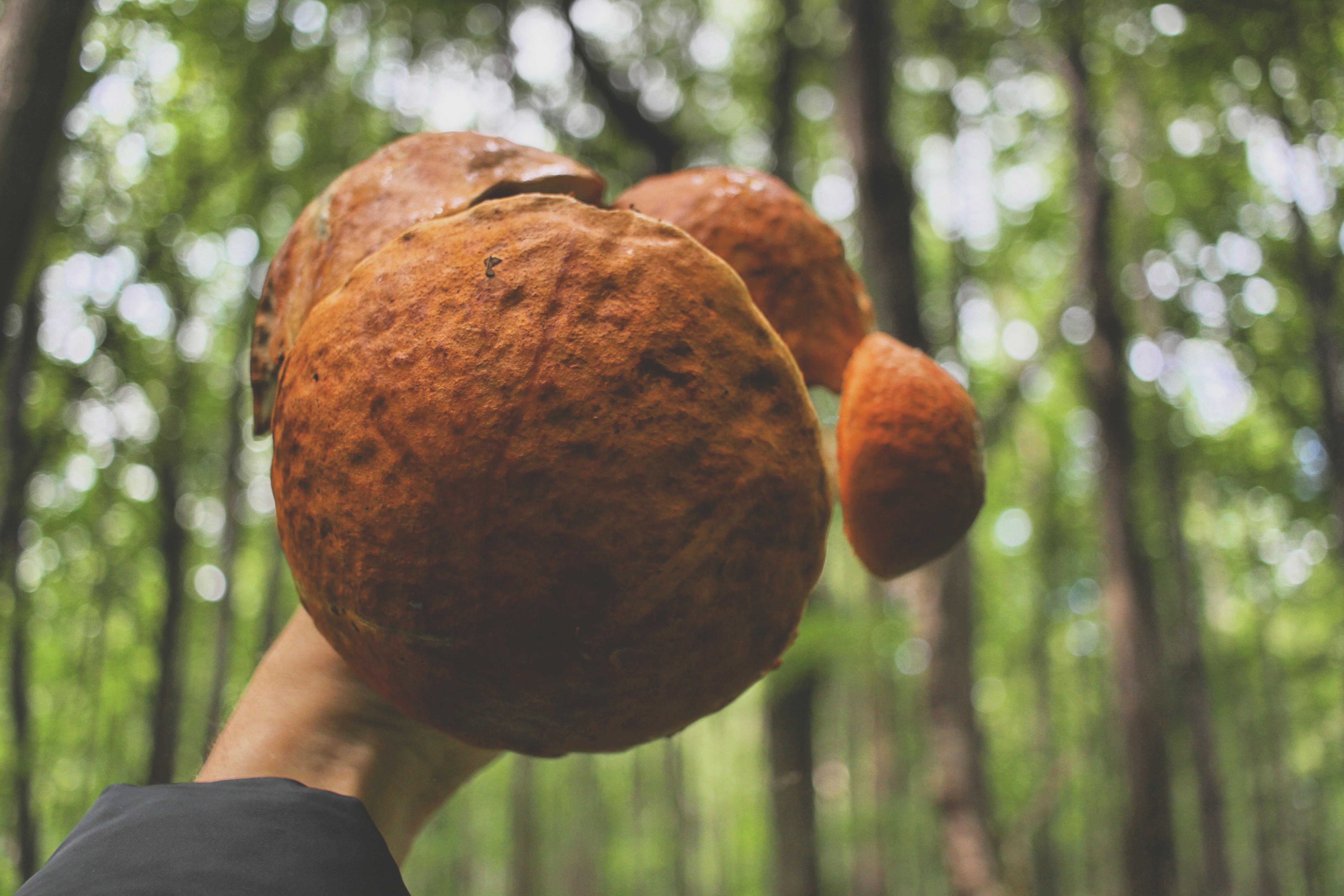 Ушел в лес за грибами